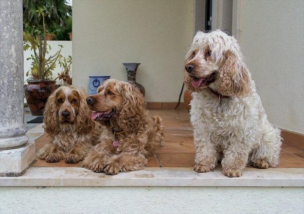 Wally, Rubi and Lucy