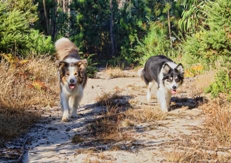 Misti and Ziggy